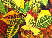 Yellow Stripes Drawings Posters - Croton Joy Poster by Iris M Gross