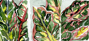 Red Leaves Drawings - Crotons in Red and Green by Mindy Newman