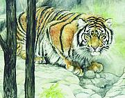 Bengal Painting Framed Prints - Crouching Tiger Framed Print by Morgan Fitzsimons
