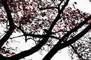 Red Autumn Posters - Crow and Tree in Black White and Red Poster by Dean Harte