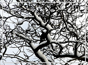 Crow Cards Posters - Crow camouflaged in snow covered tree Poster by Rose Santuci-Sofranko