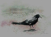 Blackbird Digital Art Posters - Crow In A Puddle Poster by Arline Wagner