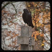 Graveyard Digital Art - Crow Of Fall by Gothicolors And Crows