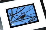 Fused Glass Art - Crow on a Wire by Judy Macauley