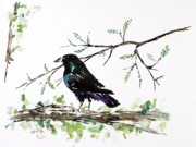 Blackbird Paintings - Crow On Branch by Carolyn Doe