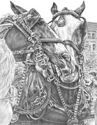 Swan Drawings Posters - Crowd Pleasers - Clydesdale Draft Horse Art Print Poster by Kelli Swan