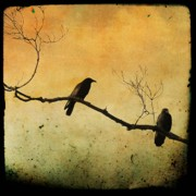 Brnch Posters - Crowded Branch Poster by Gothicolors With Crows