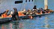 Sea Lions Prints - Crowded Dock Print by Fraida Gutovich