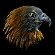 Yellow Beak Paintings - Crowhawk by Peter Piatt