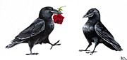 Crows Paintings - Crowmance by Beth Davies