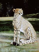 Cheetah Paintings - Crowned Regal by Steve Goad