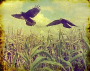 Crows Prints - Crows Of The Corn Print by Gothicolors And Crows