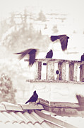 Winter Crows Posters - Crows on a roof Poster by Silvia Ganora