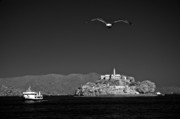 Alcatraz Art - Cruising to Alcatraz by James Walsh