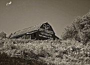 Chewing Tobacco Prints - Crusading Barn monochrome Print by Steve Harrington