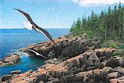 Maine Drawings Prints - Crusing Otter Point Print by Brent Ander