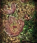 Flowers Photographs Photographs Prints - Crying Crocus Print by Jerry Cordeiro