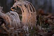 Frost Photos - Crystal and Light by Douglas Barnett
