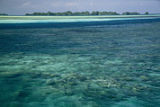 Caroline Islands Prints - Crystal Clear Blue Waters Print by Tim Laman