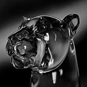 Mascot Metal Prints - Crystal Cougar Head III Metal Print by David Patterson