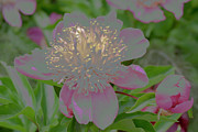 Living To Live Prints - Crystalline Flower Print by Don Wright
