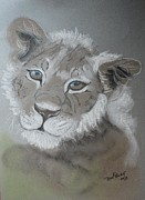 Lion Pastels - Cub by Beryl Stewart