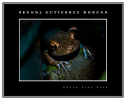 Cuban Tree Frog Posters - Cuban Tree Frog black border Poster by Brenda Gutierrez Moreno