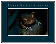 Cuban Tree Frog Posters - Cuban Tree Frog blue border Poster by Brenda Gutierrez Moreno