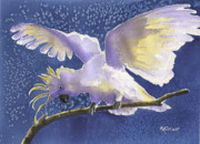 Cockatoo Painting Framed Prints - Cuckoo Cockatoo Framed Print by Marsha Elliott