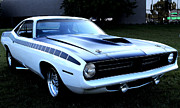 Barracuda Metal Prints - Cuda Metal Print by Scott Hovind
