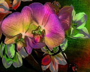 Orchids Digital Art - Cuddling by Doris Wood