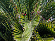 Green Foliage Posters - Cuenca Pretty Palm Poster by Al Bourassa