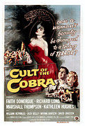 1950s Movies Photo Framed Prints - Cult Of The Cobra, Marshall Thompson Framed Print by Everett