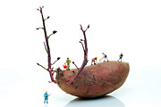 Laughing Digital Art Prints - Cultivation on a sweet potato Print by Mingqi Ge