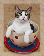 Cat Art Photos - Cup O Tilly 3 by Andee Photography