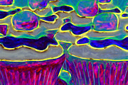 Desert Digital Art Prints - Cupcakes v2 - Painterly Print by Wingsdomain Art and Photography