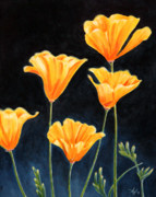 California Poppy Paintings - Cups of Gold by Arie Van der Wijst