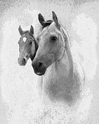 Quarter Horses Metal Prints - Curiosity Metal Print by Betty LaRue
