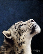Snow Leopard Posters - Curiosity Poster by Bill Fleming