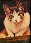 Feline Cat Art Paintings - Curiosity by Billie Colson