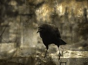 Corvidae Prints - Curiosity Print by Gothicolors And Crows
