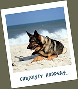 Shepherd Island Posters - Curiosity Happens Poster by Ania M Milo