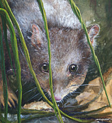 Ground Paintings - Curious - Northern Quoll by Jan Lowe