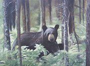 Canadian Wildlife Posters - Curious Bear Poster by Tamara Campeau