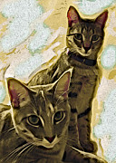 Cat Prints Digital Art Framed Prints - Curious Cats Framed Print by David G Paul
