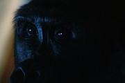 Scott Hovind - Curious Eyes