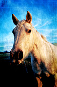 Horse Greeting Cards Prints - Curious Horse Print by Toni Hopper