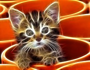 Cute Kitten Digital Art Posters - Curious Kitten Poster by Pamela Johnson