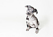 One Animal Posters - Curious Puppy Poster by Chad Latta