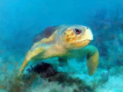 Green Sea Turtle Mixed Media - Curious Sea Turtle by David  Van Hulst